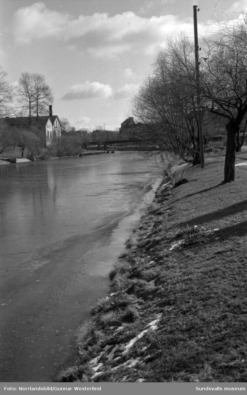 Vårflod med högt vattenstånd i Selångersån. Bilder från  områdena på båda sidor om Storbron samt vid Puckelbron.
