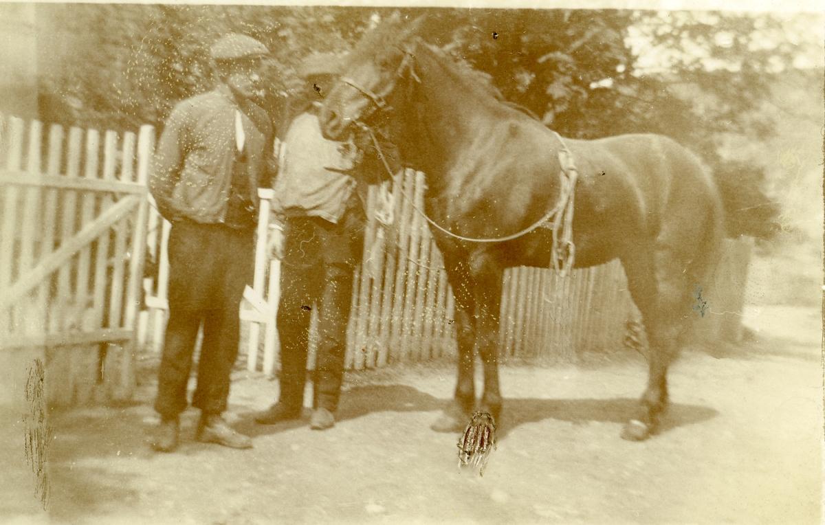 """Martin Islandsmoen med hesten """" Silkesvarten """" ved Liffengren."""