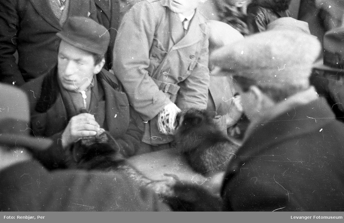 Fra utstillingen om høsten under byjubileet i 1936, pelsdyrutstilling.
