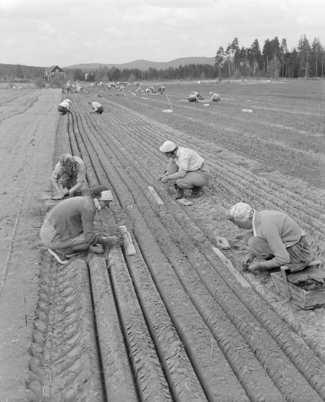 Arbeid i åker 1958-59
