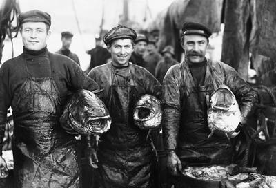 3 digre Torske (Skrei) 1910. Foto/Photo