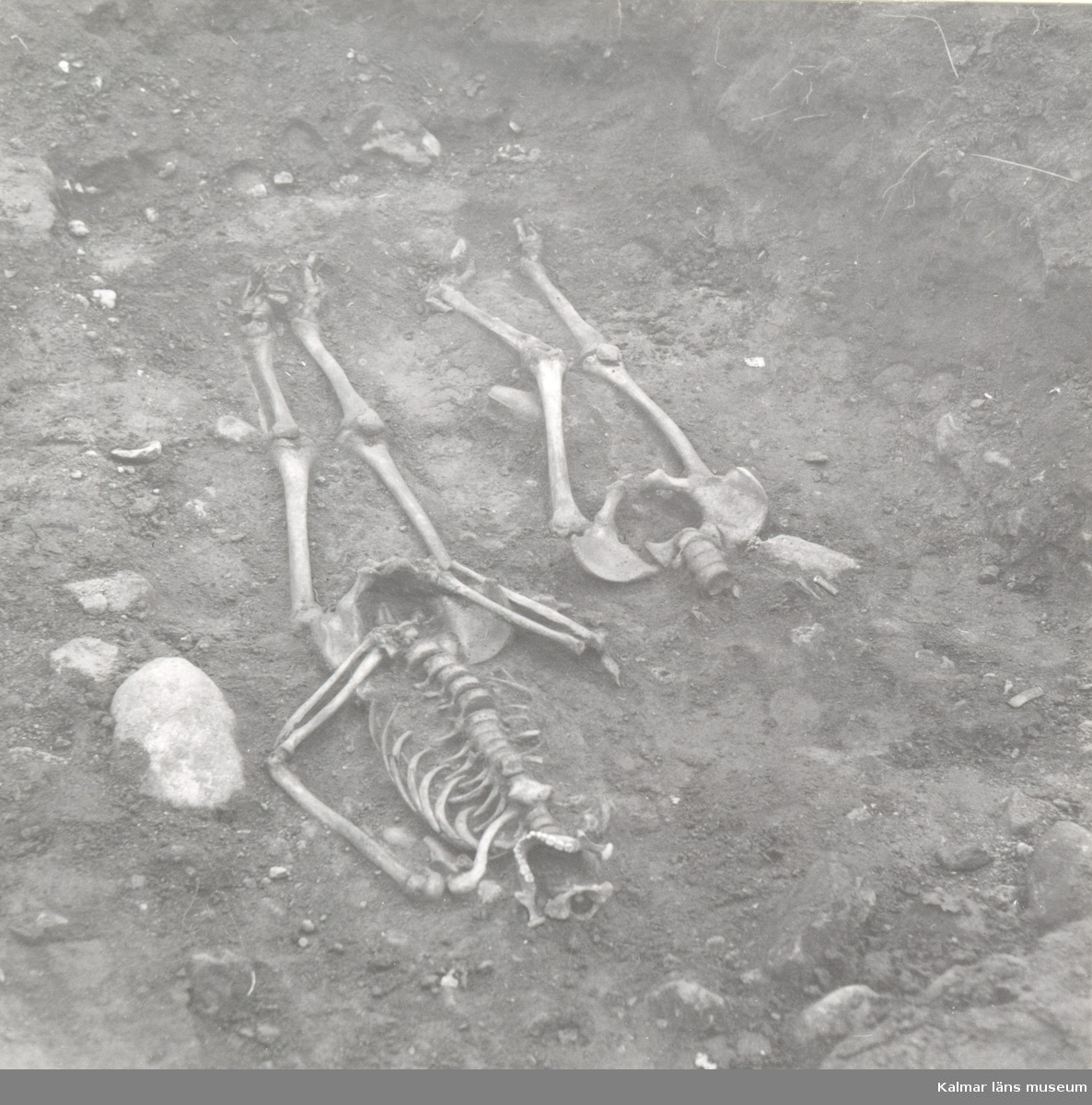 Skelett, foto från SV. Foto:Gunnel Forsberg oktober 1965.