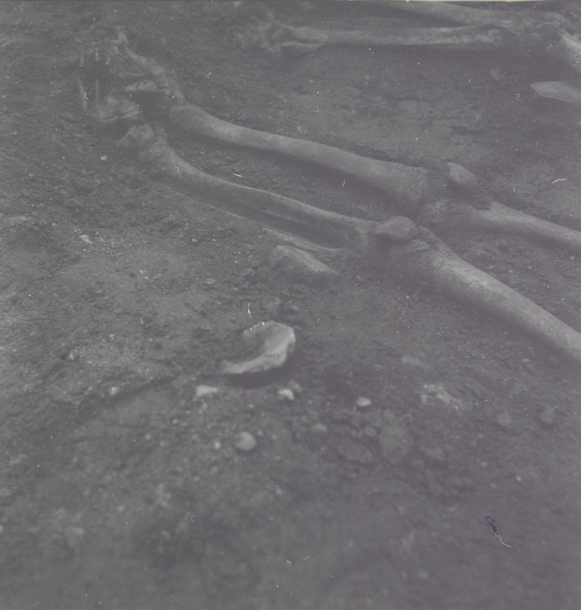 Bäcken och de långa rörbenen. Foto:Gunnel Forsberg oktober 1965.