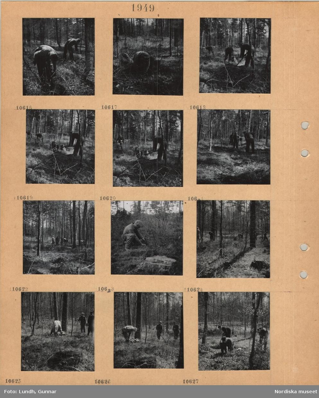 Motiv: Män och kvinnor plockar något i säckar på marken i en skog.