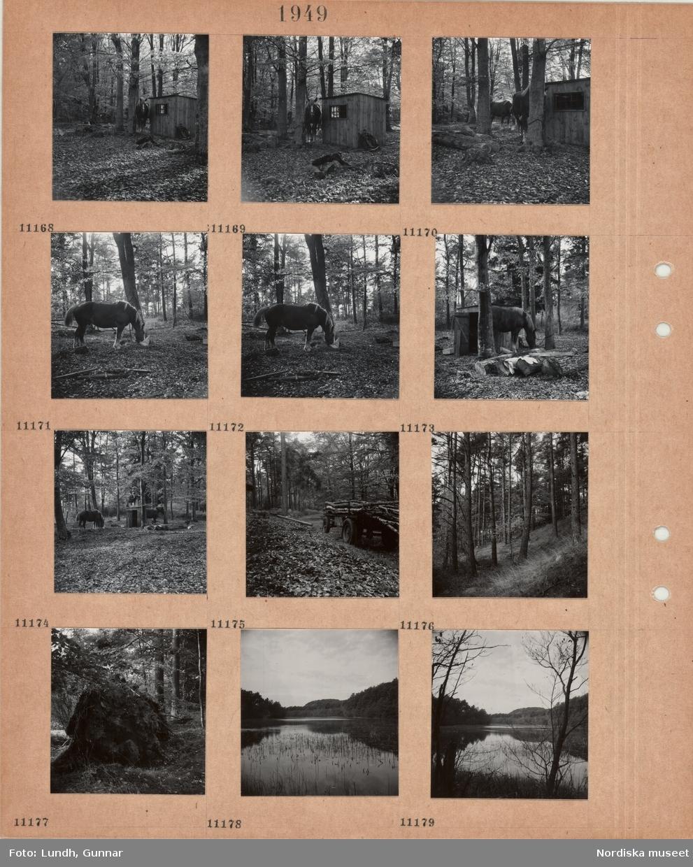 Motiv: Kullaberg, arbetshästar i en hage i bokskog, litet skjul, kärra lastad med trädstammar, sluttning med barrskog, skogomgärdad sjö.