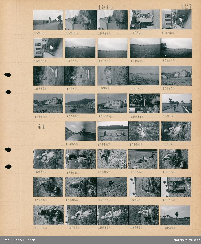 Motiv: (ingen anteckning) ; En man på cykel med tre hästar på en väg, två män bygger ett hus, porträtt av en man och en kvinna med järnvägsvagnar i bakgrunden, en cykel parkerad vid en stenmur, landskapsvy med ängar, en kvinna klipper en gräsmatta, exteriör av hus, landskapsvy med strand - hav och bebyggelse, cyklister på en väg.  Motiv: (ingen anteckning) ; En cyklist på en väg, en kvinna arbetar med upptagning av morötter eller liknande på en åker, en man paketerar morötter eller liknande i en säck, landskapsvy med åkrar - träd och cyklister.