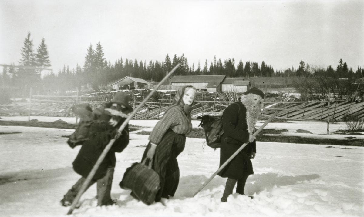Tre julebukker kommer gående i snøen i Galåsen.