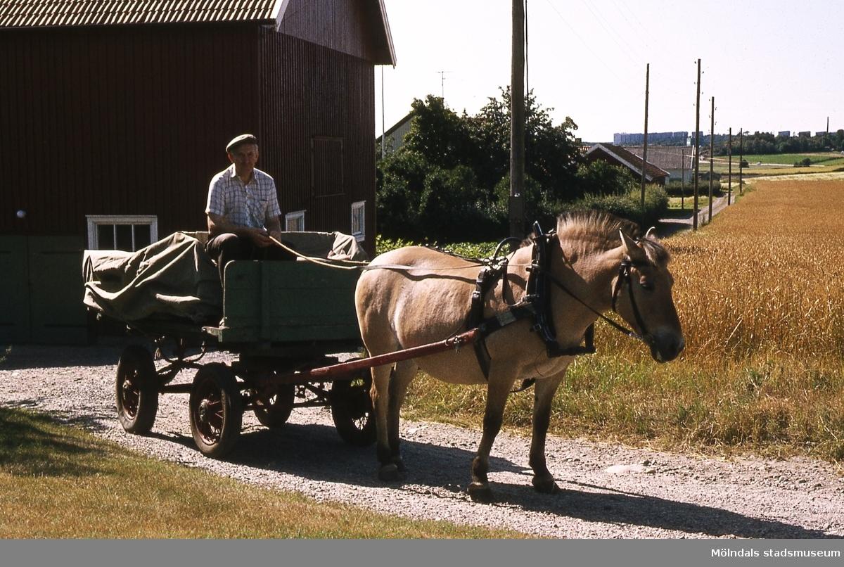 Mellangården 1 i Fässberg, Mölndal, år 1983. Denna torgvagn står på Lantbruksmuseet. Hästen är Tallstedts Tova. Kusken är Sven Olof Olsson. F 4:13.