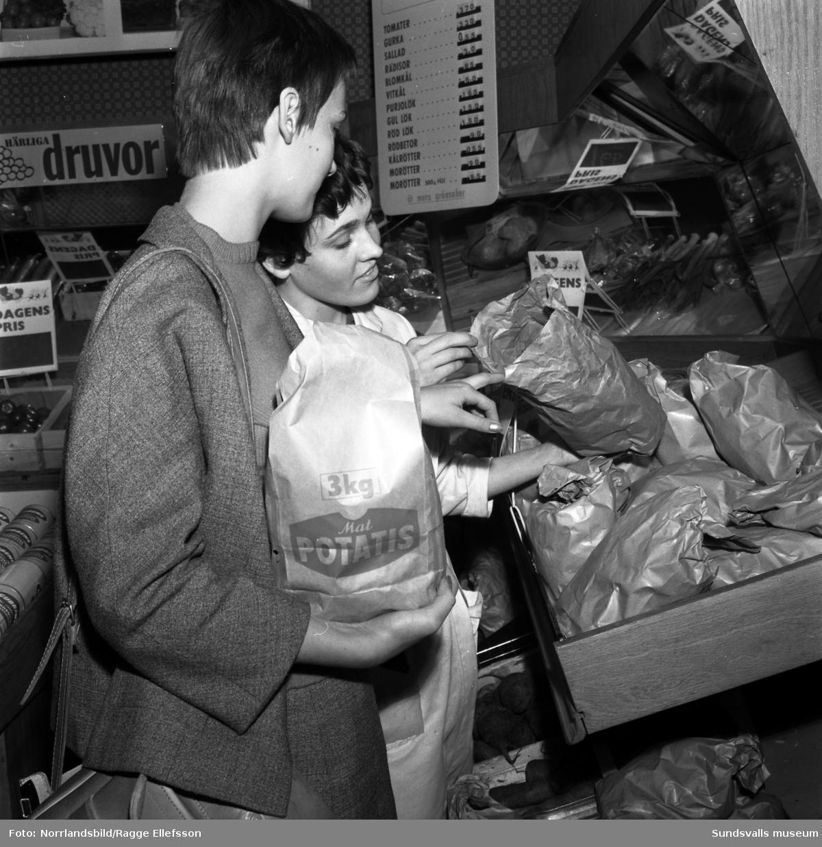 Reportagebilder om brunröta på potatisskörden 1961.