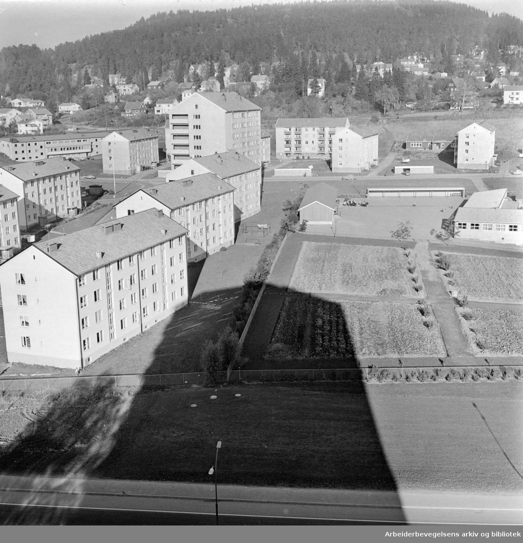 Trondhjemsveien. Høyblokkene på Bjerke. Oktober1962