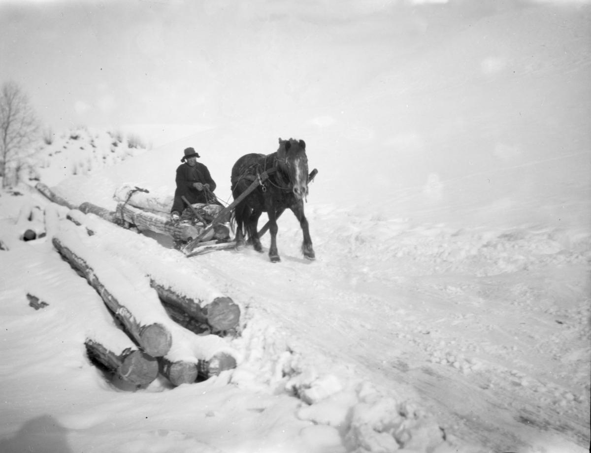 Tømmerkjøring med hest og slede