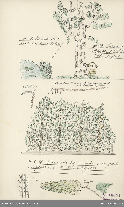 Småland. Uppvidinge o. Handbörd härad. Älghult o. Kråksmåla socken. Färglagd teckning av humlegård m.m. E.U.18027.  Sp. 98 Pors och humle för brygd.
