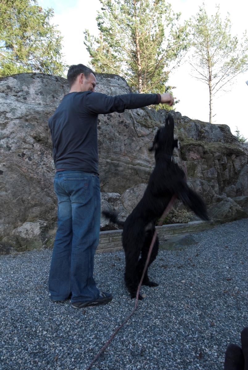Hunden Pedro leker med sin eier.