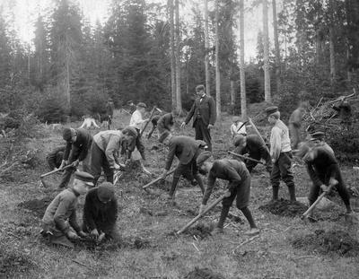 Bilde fra 1904 viser skolebarn i sving med plantehakker.