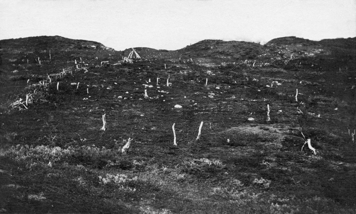 Fjellandskap i nærheten av Dødesvatnet (Devddaasjárvi) i Målselv kommune i Troms.  Fotografen har stått nede i ei li med kameraet vendt oppover en bakkestråning der en del cirka meterhøye, lyse bjørkestammer uten greiner og topper trer klart fram mot et bakgrunnsteppe av mørkere markvegetasjon.  Til venstre i bildet aner vi hvordan en del trerester, antakelig også greiner og topper fra de nevnte bjørketrærne, er kastet sammen i ei rekke, antakelig som et gjerde for beitende reinsdyr.  Like oppunder bakkekammen, øverst i bildet, ser vi det kjegleformete skjelettet etter et telt.    Ifølge en innskrift på kartotekkortet Landbruksdepartementets skogkontor hadde til dette fotografiet skal landskapet, med de skamferte trærne, være preget av svenske reindriftssamers bruk.  Det er åpenbart at fotografen, skogfunksjonæren Hilbert Helgesen, har oppfattet det han så så vandalisme overfor den sårbare ressursen bjørkeskogene i fjellbandet var.  Helgesen og andre aktører i den norske skogadministrasjonen mente at slike inngrep bidro til å senke skoggrensa i området, noe han fant problematisk ut fra sitt ressurssyn. Reindriftssamene på sin side hadde antakelig tilpasset landskapet sine behov, som migrerende reindriftsfolk.   Fotografiet er tatt i forbindelse med ei av flere befaringer som ble avviklet i samband med en norsk-svensk strid om skogbehandlinga til samer som hadde vinterbosteder i Sverige, men sommerbeiter på norsk side av riksgrensa. Fra svensk side var man opptatt av å bagatellisere de konsekvensene samenes og reinsdyras bruk av den stedlige bjørke- og furuskogen fikk, mens de norske skogfunksjonærene som var involvert i denne saken hevdet at virksomheten gjorde store innhogg i naturressursene, noe som blant annet innebar senking av skoggrensa i klimafølsomme miljøer.    Helgesen samarbeidet med den norske skogforvalteren Ivar Ruden, som i 1911 publiserte ei lita bok med tittelen «Fremstilling av en del av den skade som de svenske flytlapper og ren har voldt på skoge