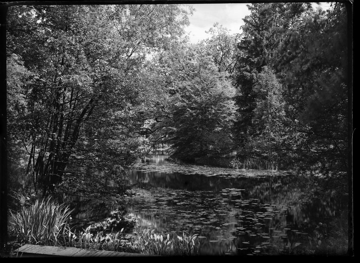 Köllerna i Nolhaga park. På ytan flyter näckrosblad och mellan träden syns Nolhagabron.