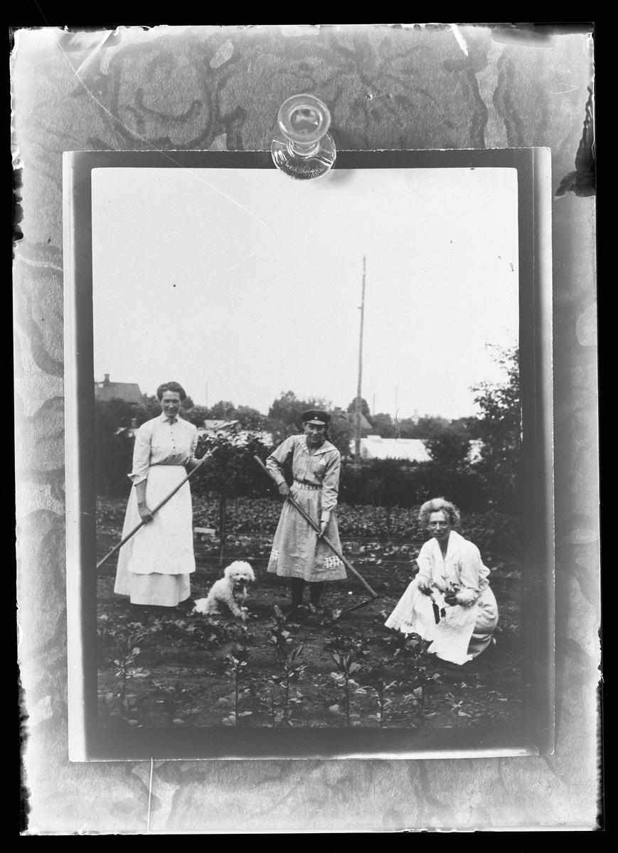 """Reprofoto av fotografi på tre kvinnor som arbetar i en trädgård. På bilden syns också en vit hund. I fotografens anteckningar står det """"Rep. för Axel Johansson""""."""