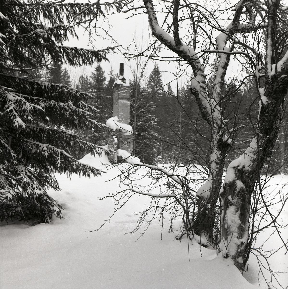 Snötäckt ruin i skogen den 10 januari 1960.