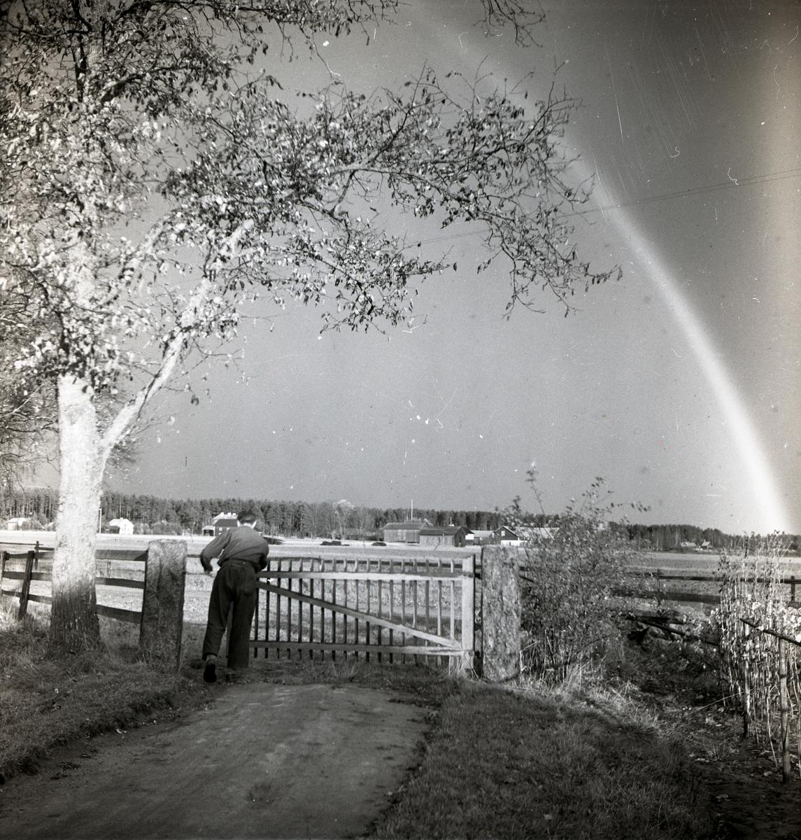 En man står vid en grind och tittar mot en regnbåge, oktober 1949.