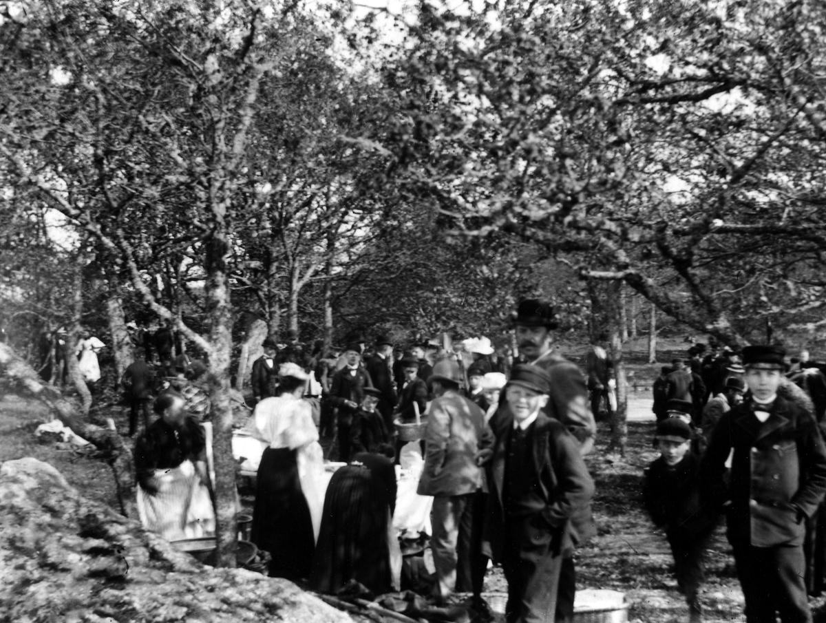 En grupp män och kvinnor i en träddunge.