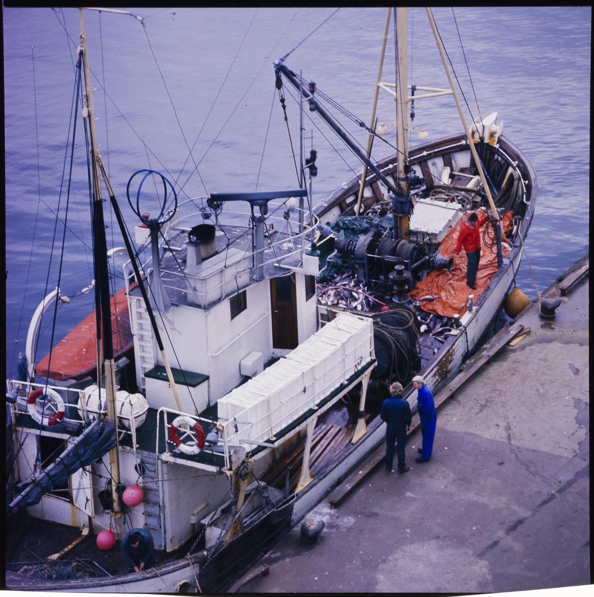 """Tråleren """"HÅFLU"""" ved kai. To står på kaien og en arbeider på dekk. Det er en del fisk på framdekket."""