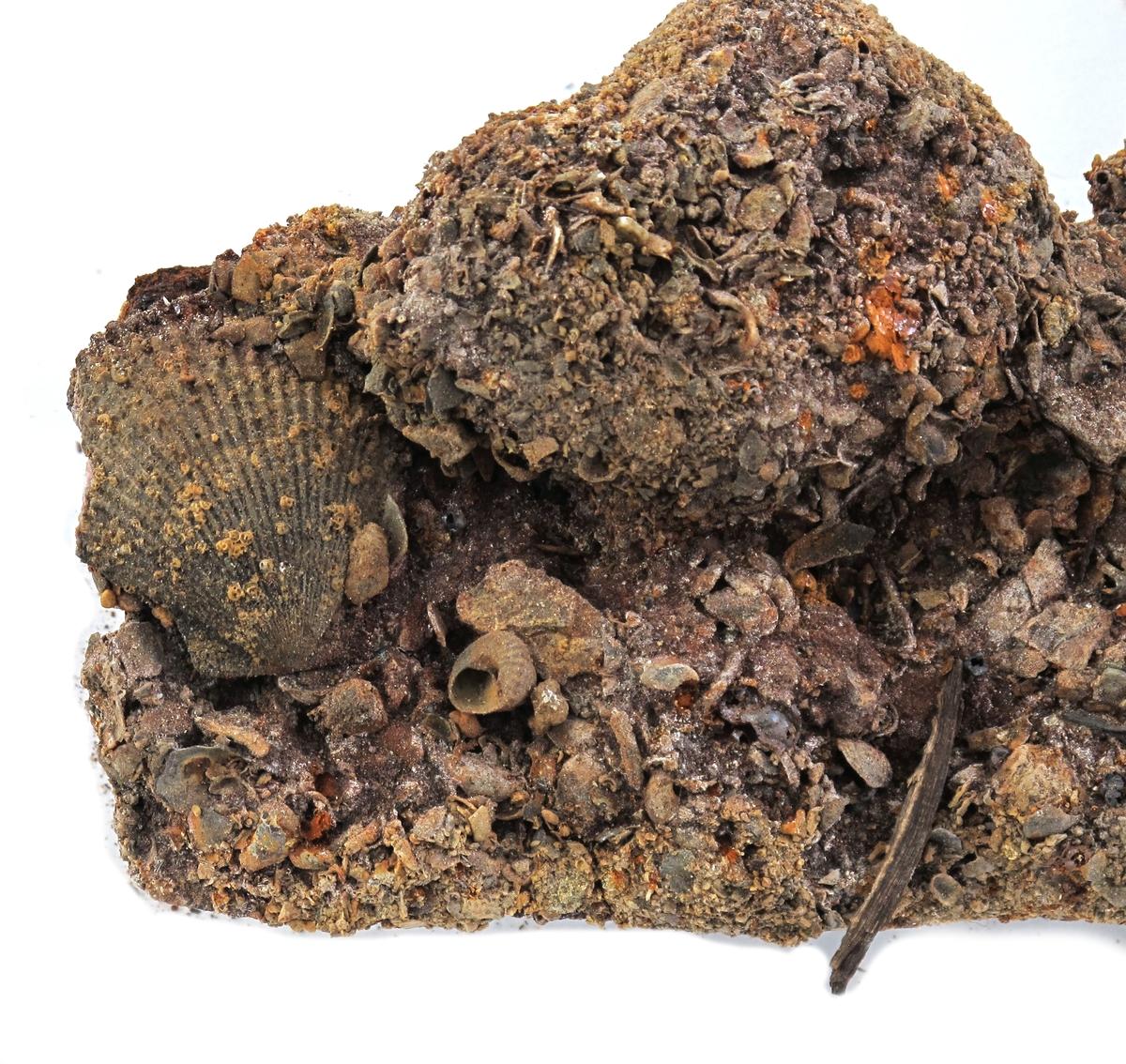 Korrosjonklump h)  Korrosjonsklump omkring et stykke jern. Består av jern, rust, stein, sand, skjell og uidentifisert materiale.