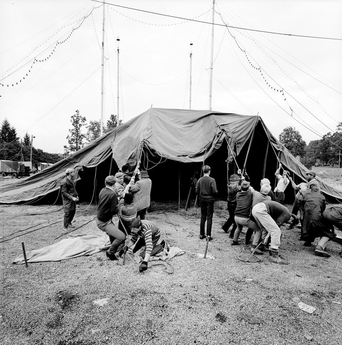 Cirkus Scott. Uppbyggnad av cirkustält