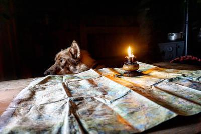 hund bak bord med kart og starinslys