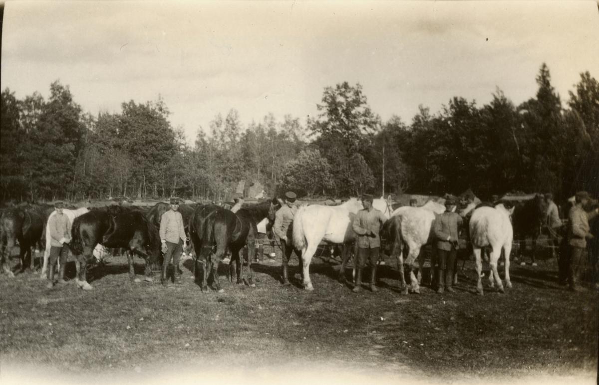 Ryktning av hästar