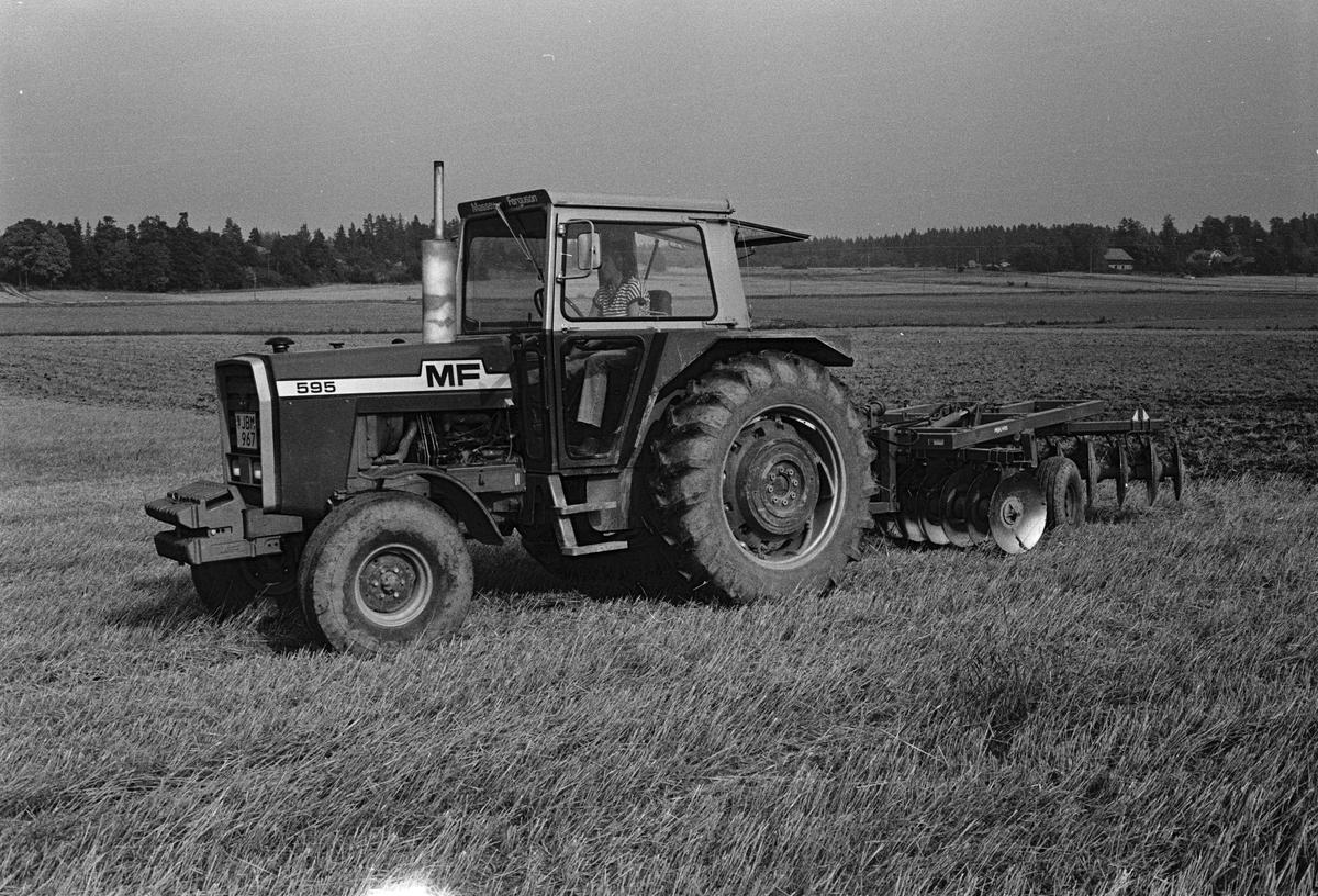 Jordbrukare Kerstin Leijon harvar åkern med en tallriksharv, Stora Bärsta, Uppsala-Näs socken, Uppland september 1981