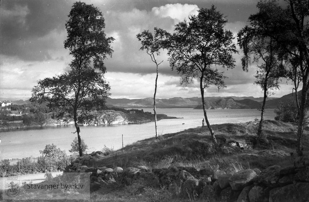 Naturfoto.. Trær og mark. .Strømvig bad / Strømvik bad