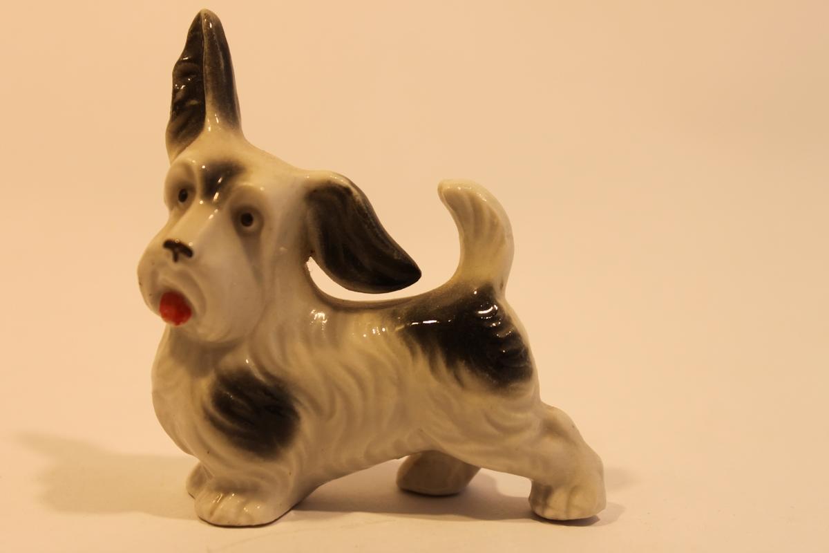Porslinshund, vit med svarta fläckar. Upprätt svans och ett öra upprätt och ett hängande.