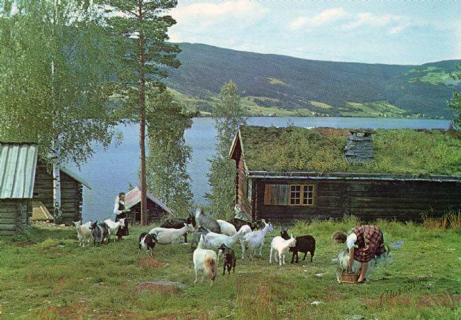 HUSMANNSPLASSEN: På 1950-talet vart det òg flytt ein heil husmannsplass frå Øvre Frigstad i Vestre Slidre til museet. I friluftsmuseet har det vore budeier på sommarjobb sidan 1960-talet. (Foto/Photo)