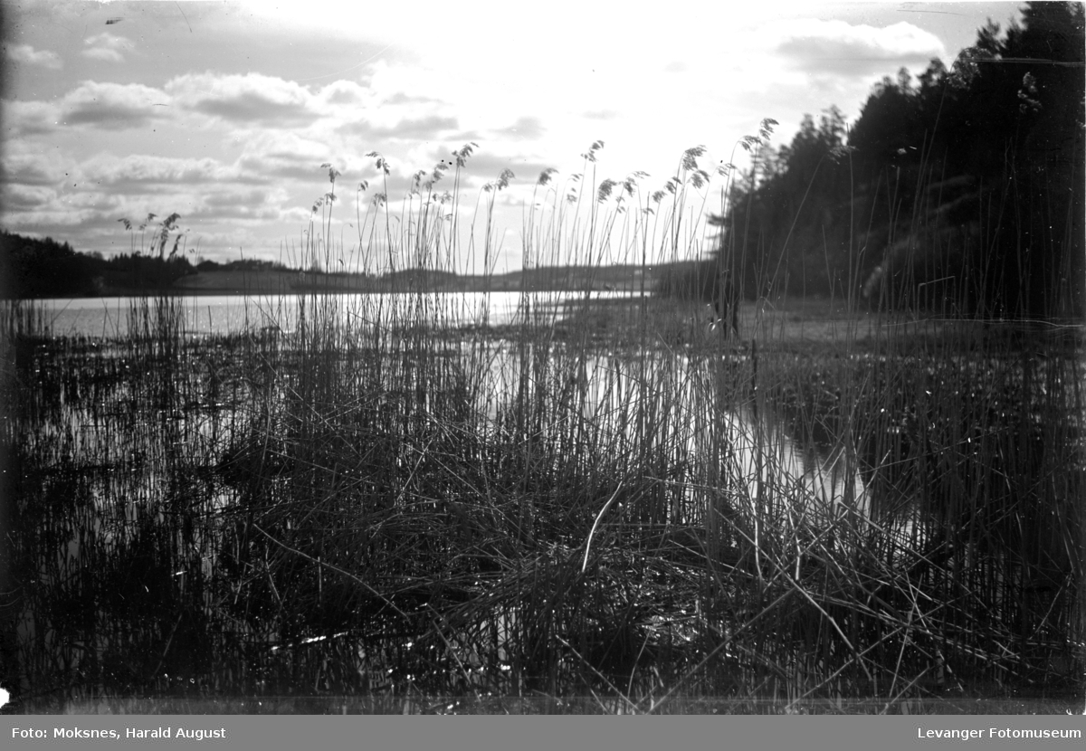 Fra en innsjø med våtmark og siv