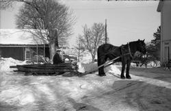 Hest trekker rustning lastet med ved/tømmer. Seks bilder fra