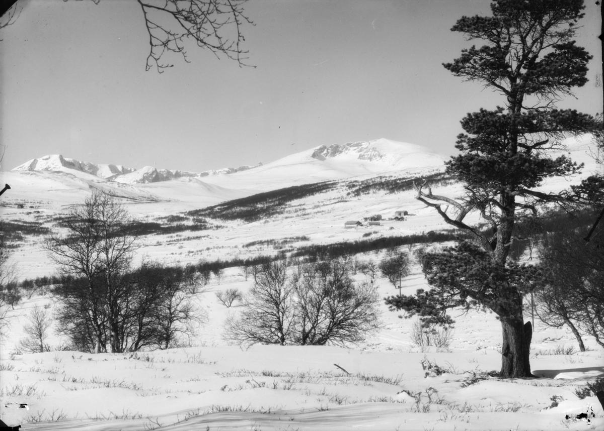 Dovrefjell, utsikt mot Hjerkinn fjellstue med Snøhetta og Svånåtindan til venstre. Vinter