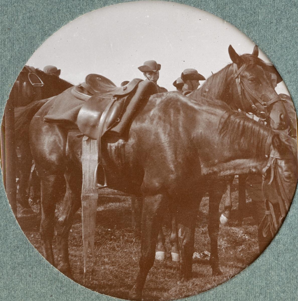 Soldater och hästar Kronprinsens husarregemente K 7.