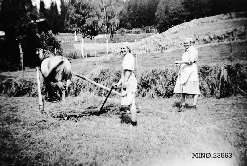 Driftige kvinnfolk sørger for vinterforet. Gudrun Hornset og Gunhild Hornset. 1948.