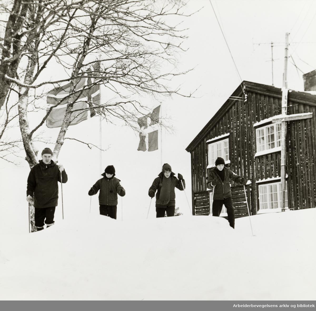 Lysebu. Danske barn lærer å gå på ski. Januar 1965