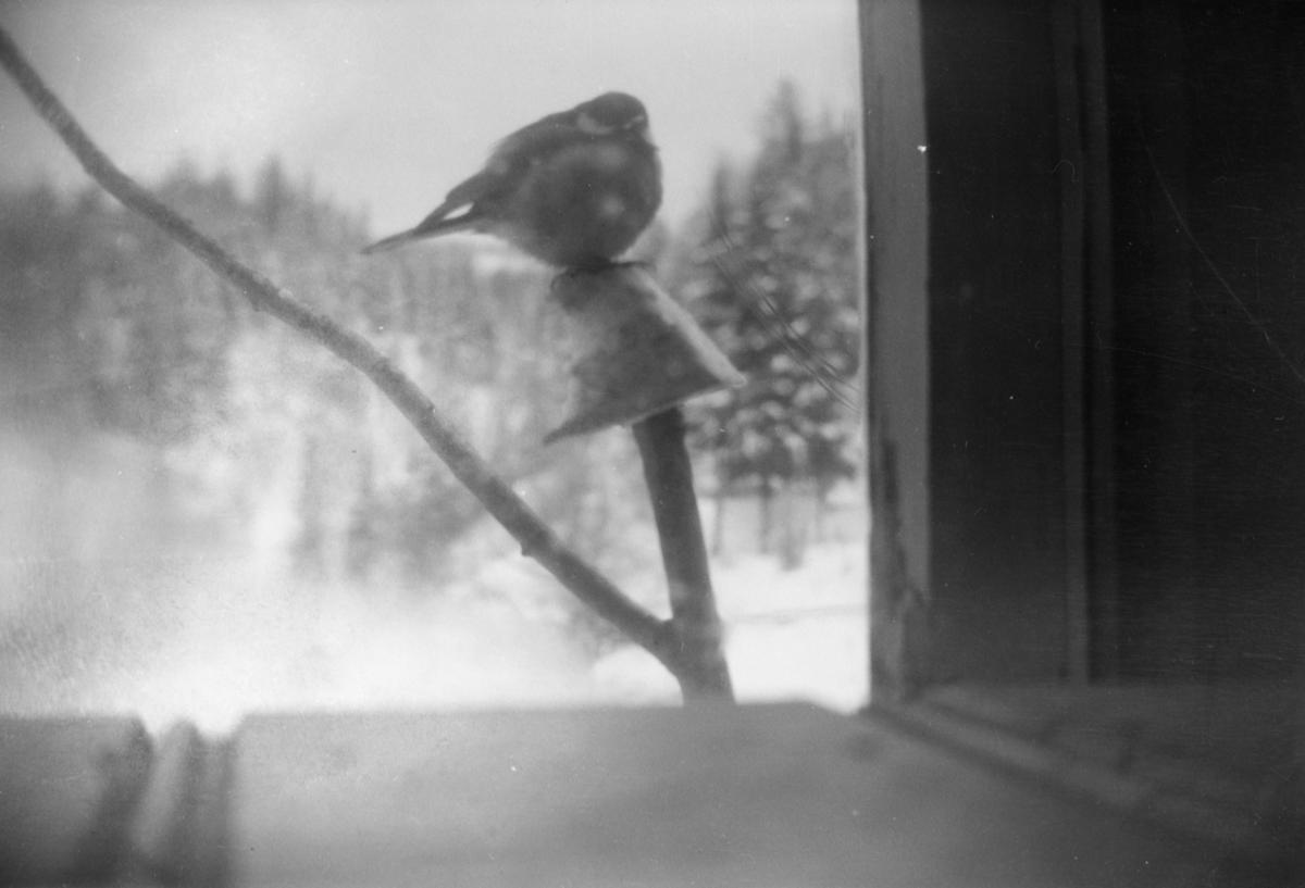 Nærbilde av en fugl. Vinterbilde.