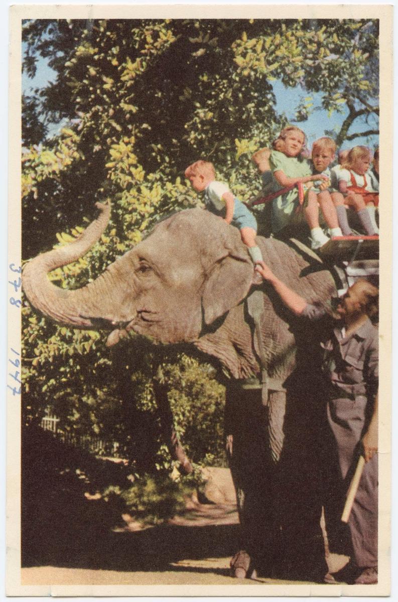 Vykort med motiv från Skansen. Barn som rider på elefanten Bambina.