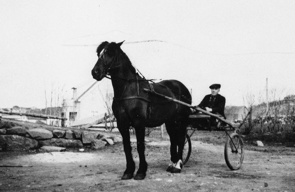 Etter 2. verdskrig vart det samla inn hestar i Rogaland som vart sende til Polen. Dette er ein av dei, travhesten Reedikk.