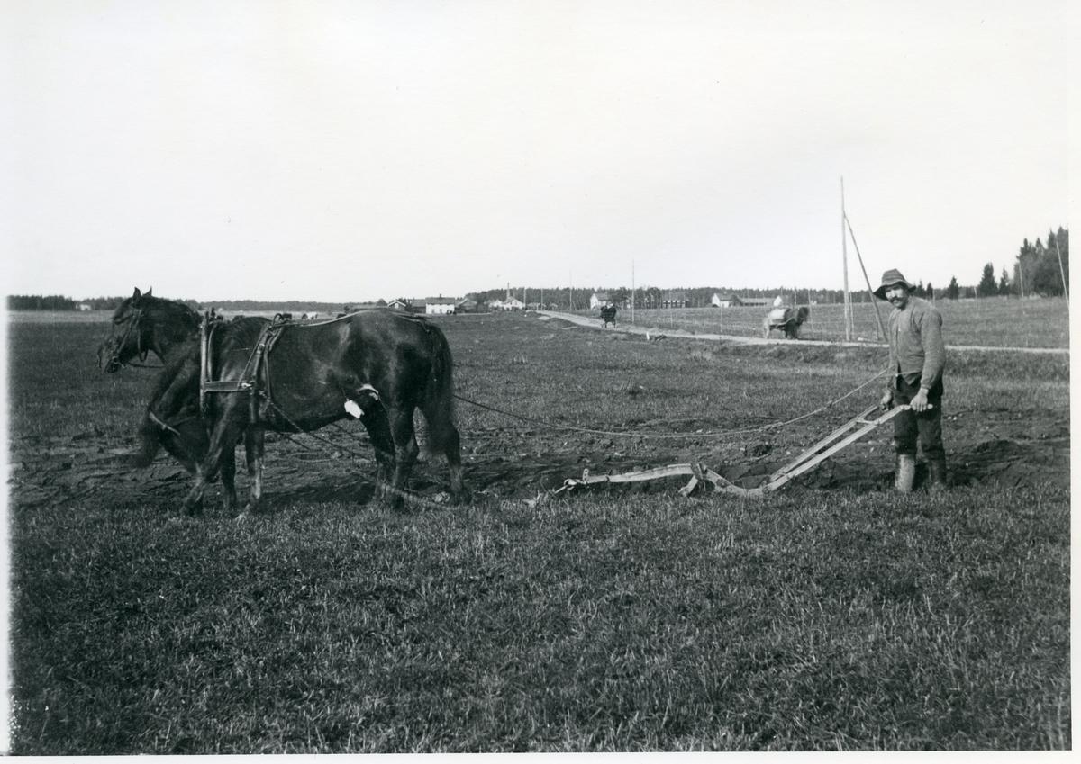 Norrby socken, Sala, Varmsätra.  Anders Olsgården.  Höstplöjning, 1915.