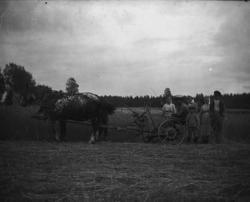 Häst med slåttermaskin i Karbenning.