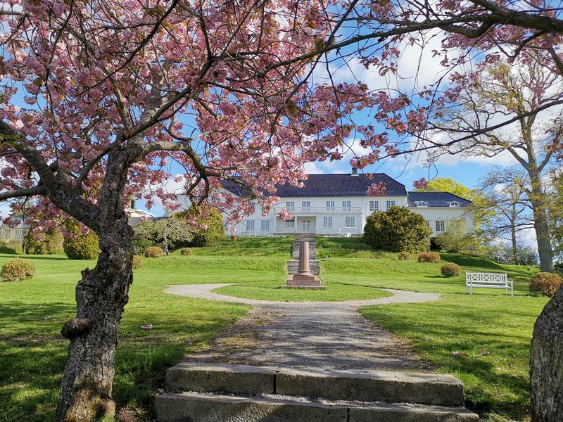 Bildet viser Rød Herregård sett fra sørlig retting. Huset er en stor, symmetrisk, hvit tømmerbygning med sort tak. Foran huset sees en liten monolitt, samt hagestien som går rundt den og leder ned mot trappetrinn i forgrunnen av bildet. I forgrunnen  sees to japanske kirsebærtrær i blomst med rosa blomster. (Foto/Photo)