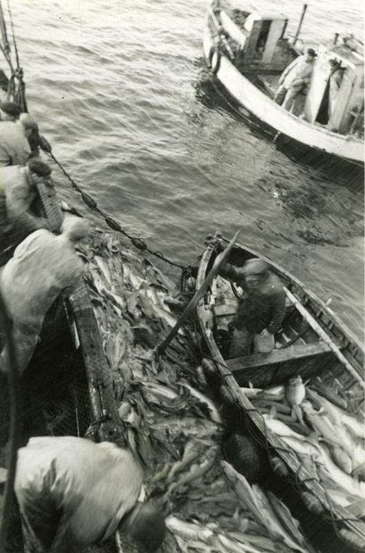 Noten er tørket opp. Dybden i fiskeposen måles med en åre