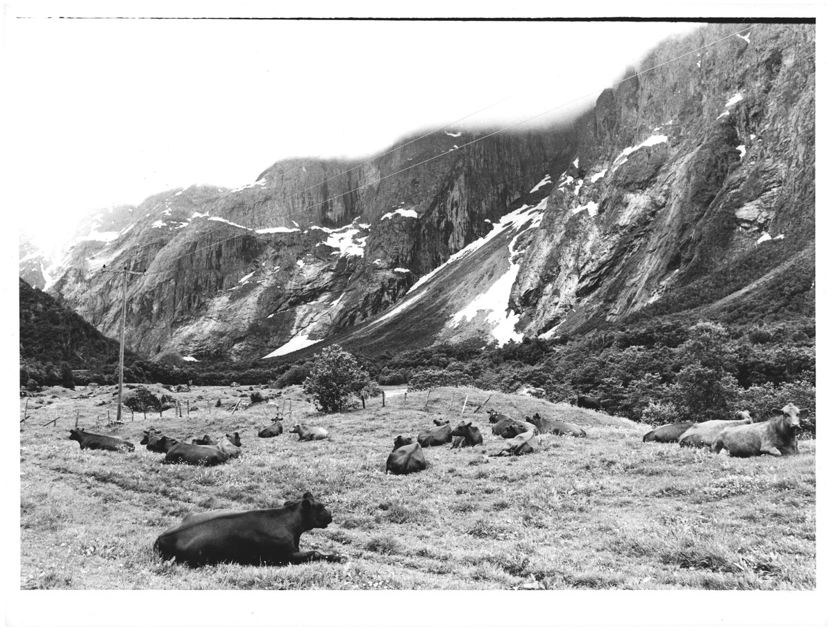 Romsdal. Fine beiter i Trollveggens naboskap