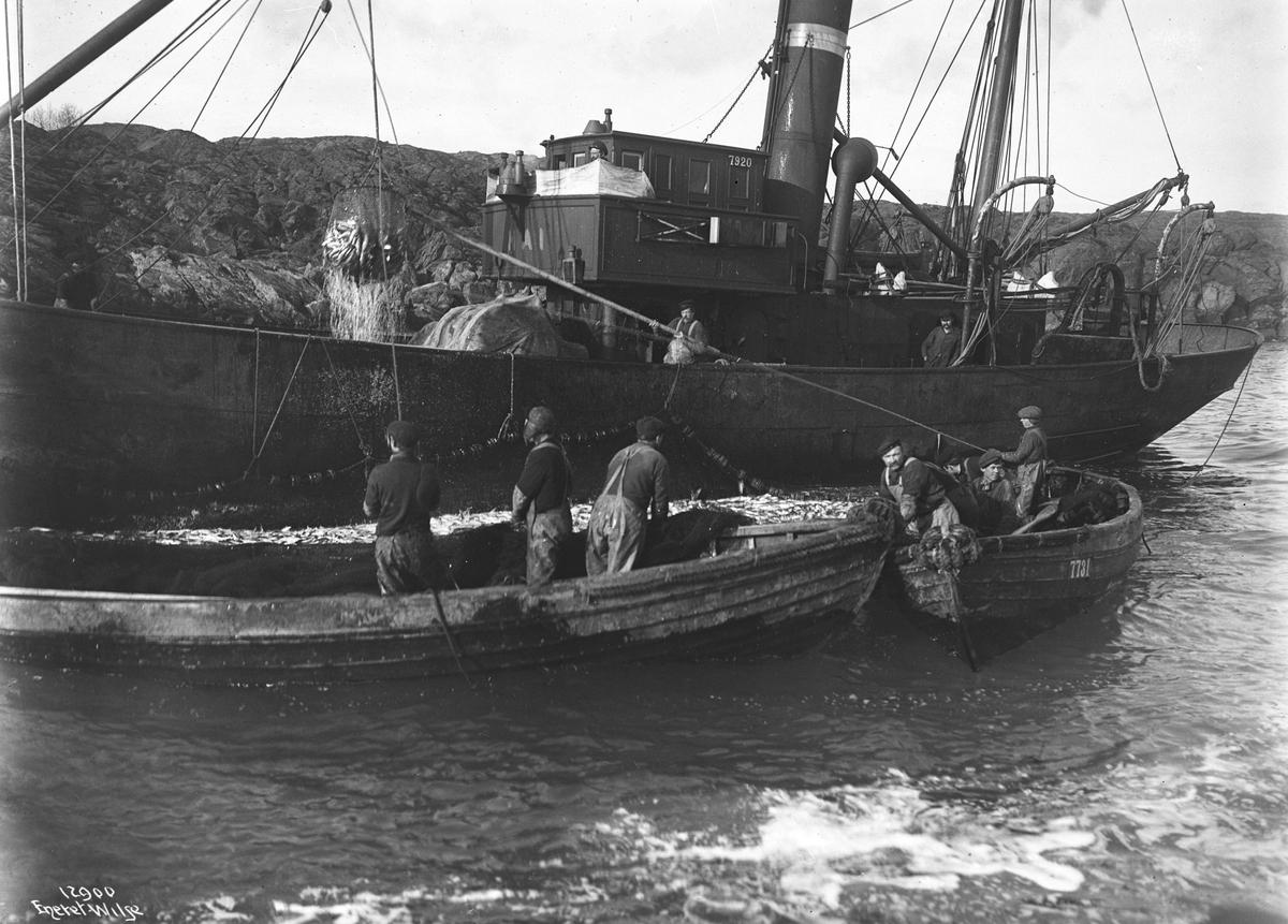 Prot: Snurpenot Silden hoves ombord