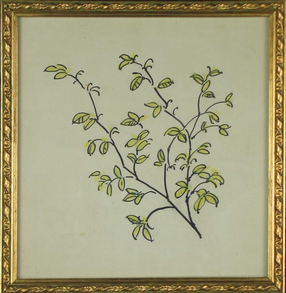 Tegning av en gren i forgylt mønstret ramme.