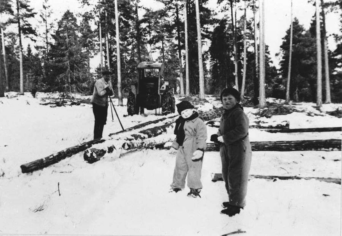 Tømmerhugst i Rullestadskogen
